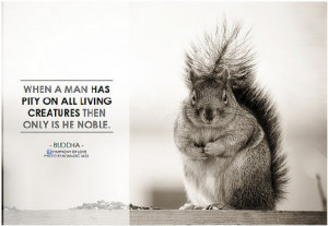 Quotes and Sayings about Animals and their Rights