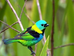... birds wallpaper beautiful birds wallpapers bird desktop wallpaper bird