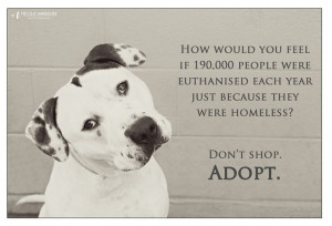... . He is at Staffy Rescue NSW. Image by Nicole Harrison Photography