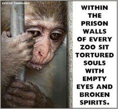Animal Quotes, Animal Rights & Religions Pledge to Boycott Zoos: www ...