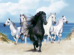 Black horse with four white horses near the sea wallpaper