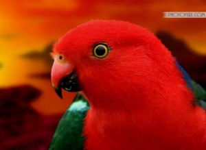 Parrot via www.sweetamazingpics.blogspot.in