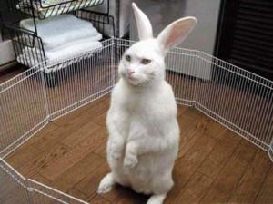 Funny Rabbit (16)