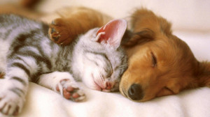 Sleep Tight, cuddling, friends, kitten, puppy, sleeping wallpapers