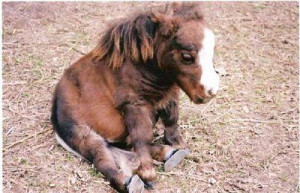 miniature horse quotes   Daily Dose Of Cute Tiger Cubs White And ...