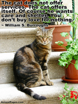 And Is Showing No Sings Of Aggression At The Shelter Animal Quote