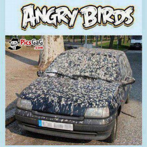 ... funny shit angry birds car shit image funny shit pic wallpaper funny