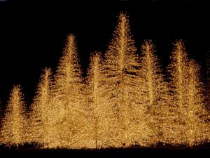 Christmas Christmas Trees