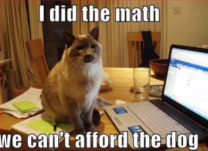 Did The Math Cat Meme