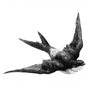bird, blackwhite, flying, graphic, illustration, swallow