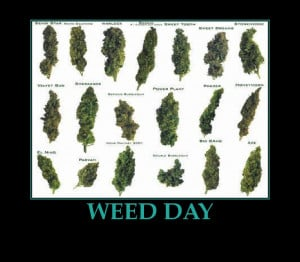 Celebrating 420 or 4:20 or 4/20 National Weed Day Quotes and Jokes