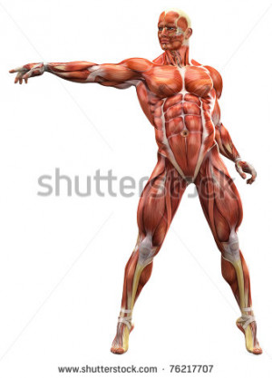 Muscle Man Front View Stock