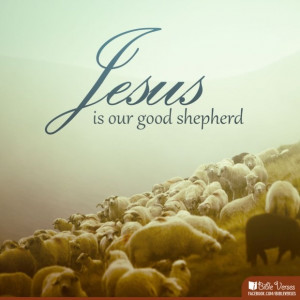 am the good #shepherd; I know my #sheep and my sheep know me. #John ...