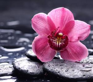 Peace-meditation-Zen-Orchid-flower-marble-stone-rock-1440x1280.jpg