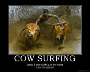 cow-surfing-cow-surfing-demotivational-poster-1263513725.jpg