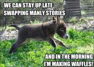 donkey funny quotes waffles