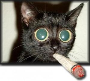 funny-tee-shirt-sayings-cat2.jpg