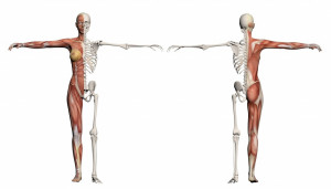 Way Stretch and the Anatomy of Pilates