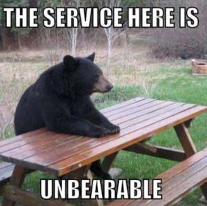 Really funny bear photo-W630