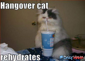 Hangover_Cat_Funny_picture
