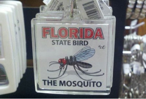 Funniest_Memes_florida-state-bird-the-mosquito_14926.jpeg