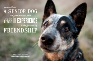 Celebrating Senior Dog Month