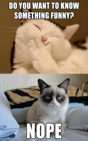 ... grumpy cat more please there might even be a grumpy cat for every