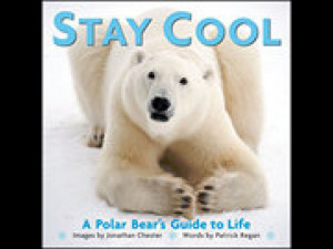 Cool Polar Bear