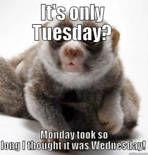 It's only Tuesday? - IT'S ONLY TUESDAY? MONDAY TOOK SO LONG I THOUGHT ...