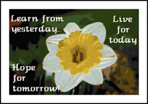 cross stitch pattern Daffodil and Life Sampler