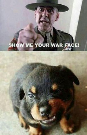 By Admin on May 15, 2013 Funny Animal Pictures