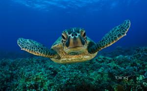 Sea Turtle Hug