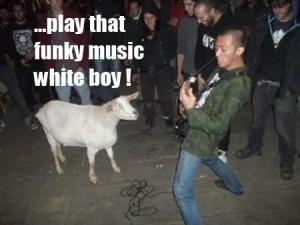 Funny Goat Captions Funny goat