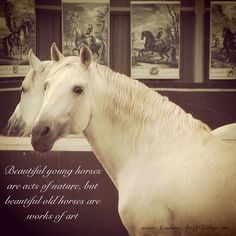 Beautiful young horses are acts of nature, but beautiful old horses ...