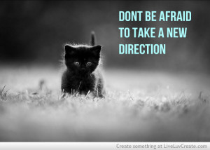 Don't Be Afraid To Take A New Direction. ~ Cat Quotes