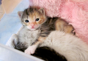 Cute Kittens Cuddling Bed Time