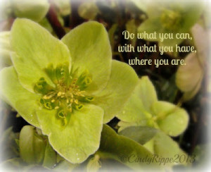 Green Helleborus with quote by T. Roosevelt ©CindyRippe2013