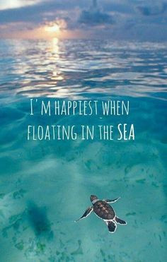 Quotes About Sea Creatures Quotesgram