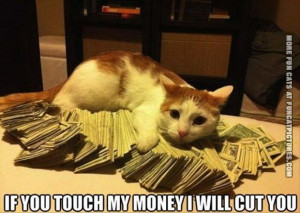 funny cat pics touch my money and ill cut you