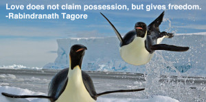 ... penguin day here are our favorite love quotes presented by these