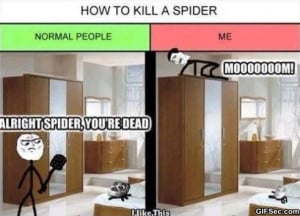 Funny-2014-How-to-Kill-A-Spider.jpg