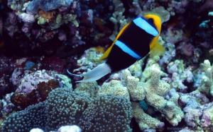 Underwater Wallpaper 78