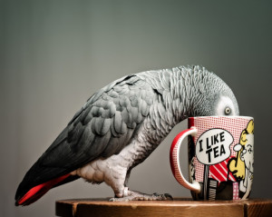 want a birdy of my own in case you re interested the book is alex and ...