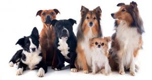 Animal-Lovers-pet-sitter-dog-sitter.png