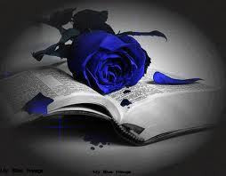 Blue rose - poetry Photo