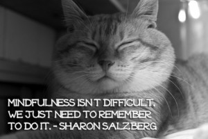 MINDFULNESS QUOTES: Thich Nhat Hanh, Ajahn Chah, Sharon Salzberg and ...