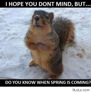 Top 30 most funniest and humorous animals pictures.