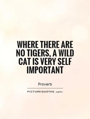 Cat Quotes Tiger Quotes Proverb Quotes