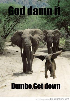 baby elephant jumping big ears animal god damn it dumbo get down funny ...