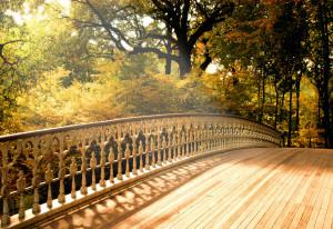 Nature's Seasons Magical Autumn (Sylvie's season)